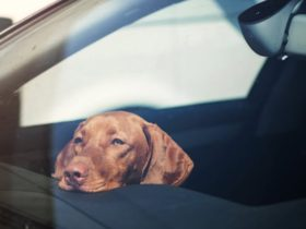 tesla-dog-mode:-here's-a-top-tip-for-anyone-new-to-the-technology