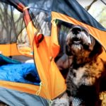 first-tent-ever-to-offer-a-separate-section-for-your-dog-makes-hiking-more-fun