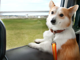 honda-japan's-website-even-has-a-section-dedicated-to-dogs-and-dog-owners
