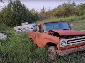 abandoned-forest-property-hides-massive-hoard-of-vintage-cars,-trucks,-and-tractors