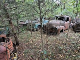 hoard-of-abandoned-chevrolet-3100-trucks-discovered-in-the-woods,-all-for-sale